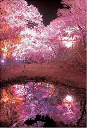 Gorgeous lights in the cherry blossom trees! I love the reflections in the…