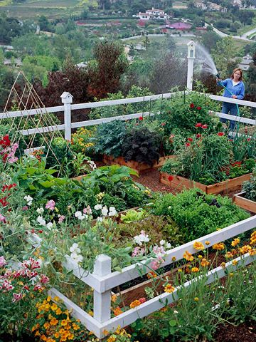 Great Looking Vegetable Garden. Love the raised beds and the cute white fence.