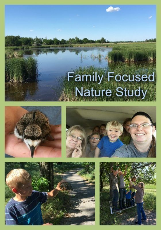 Nature studies is a great way to make learning new concepts fun! Take an fun and relaxed approach to homeschool science with family focused nature studies!