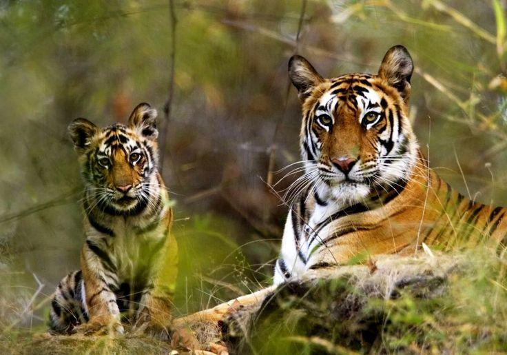 Выследите тигра - https://www.sribno.com/ranking/vysledite-tigra.html