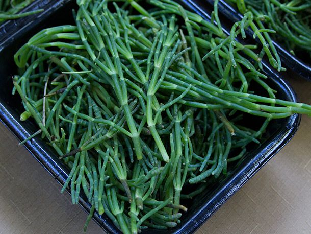 Sea Beans from PSU Farmers' Market