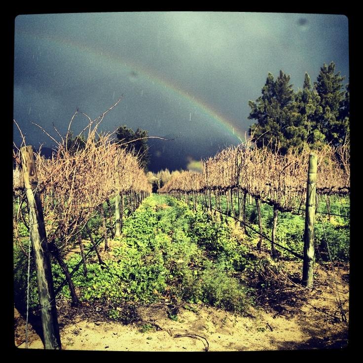 #rainbow #winter #winelands