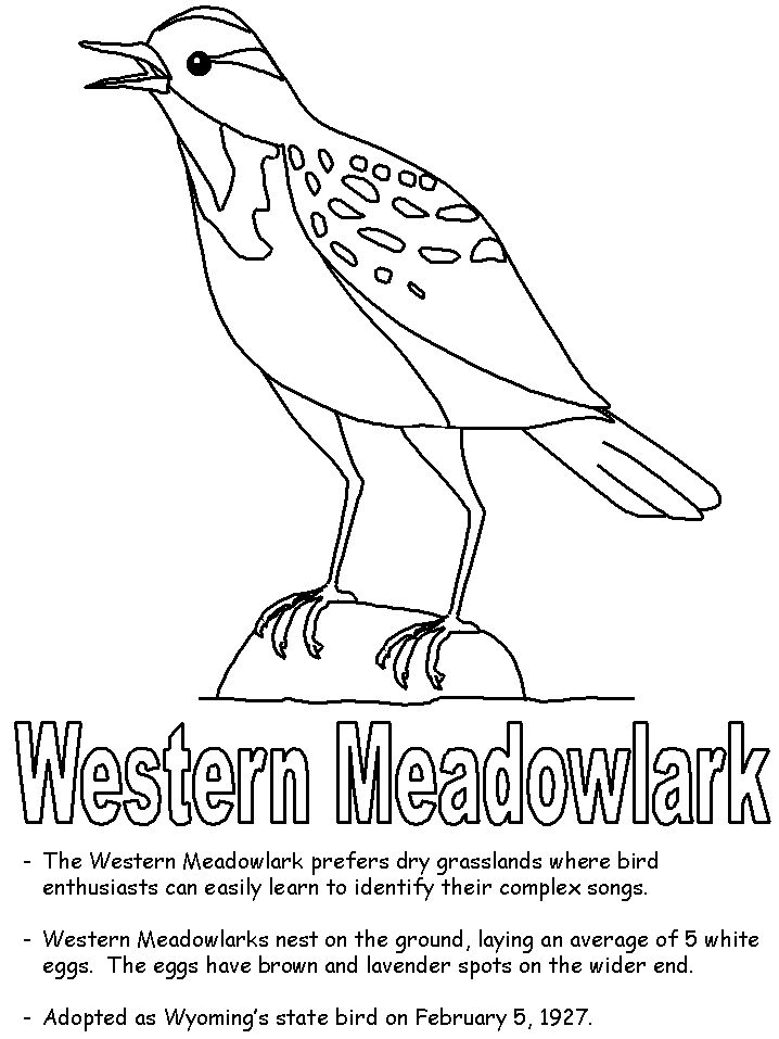 Western Meadowlark Coloring Page Flag Coloring Pages State