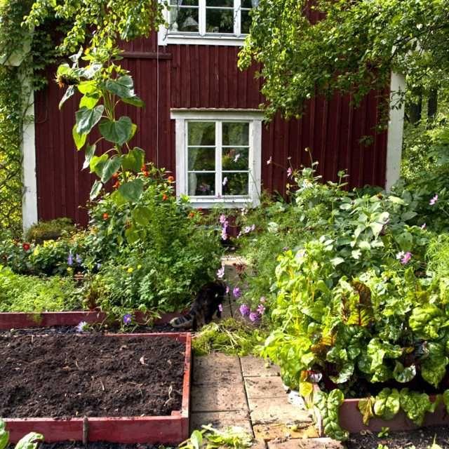 Trädgård O Sånt : Best images about trädgård on gardens raised beds