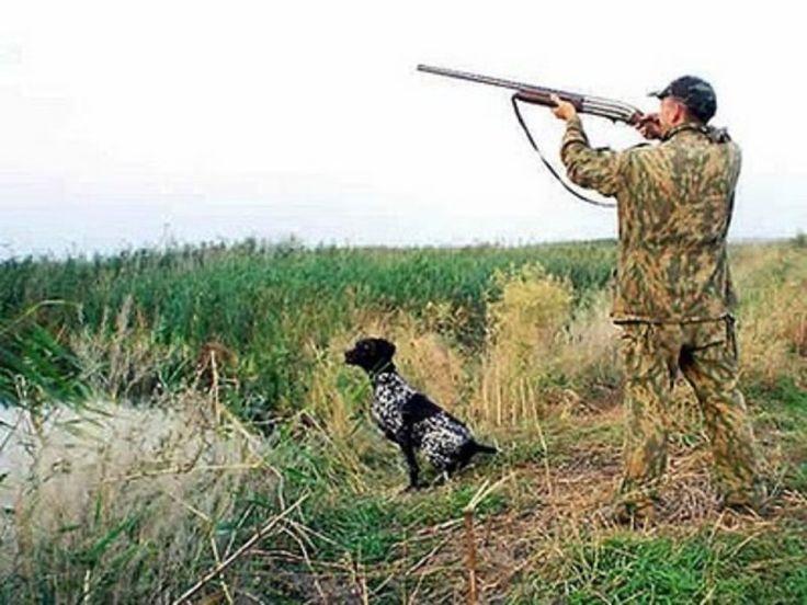 ОХОТНИЧЬЕ ОРУЖИЕ И СТРЕЛЬБА - СОВЕТЫ ОХОТНИКАМ.   Иногда в лесу можно найти стреляные гильзы. По ним можно определить, на какой вид дичи шла охота. Естественно, если это не стрельба по бутылкам. На гильзах вместо номера иногда ставят размер дроби в миллиметpax. В России дробь изготавливают 15-ти номеров. От № 11 до 0000. Каждый номер дроби отличается от другого на 0,25 мм. Самая мелкая дробь (№ 11) имеет диаметр - 1,5 мм. Самая большая (0000) - 5 мм. Чем больше номер дроби, тем она меньшего…