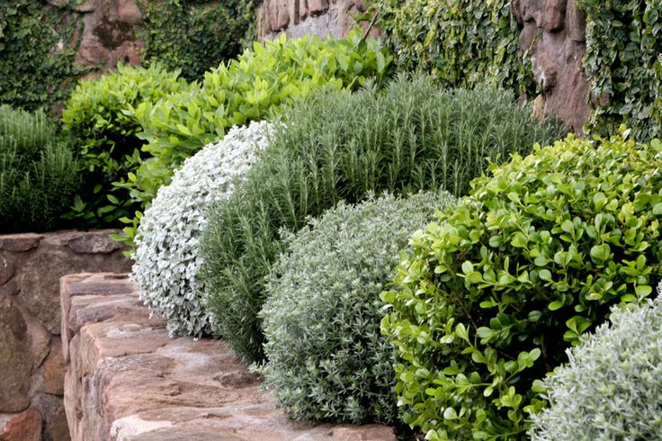 repetition and variation of rounded, compact shrubs and sub-shrubs - nice contrast with the linear stone wall. Garden designed by Spirit Level Designs, Australia