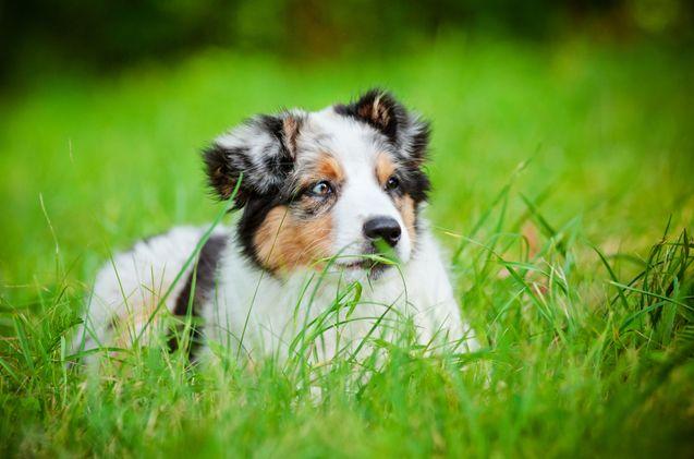 cute-dog-names