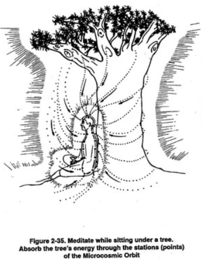 g. Meditar enquanto sentado sob uma árvore Depois de ter desenvolvido a capacidade de sentir Chi da árvore, você pode sentar-se debaixo da árvore e meditar. Desenhe a energia da árvore em você através das estações (pontos) da órbita microcósmica. (Figura 2-35)