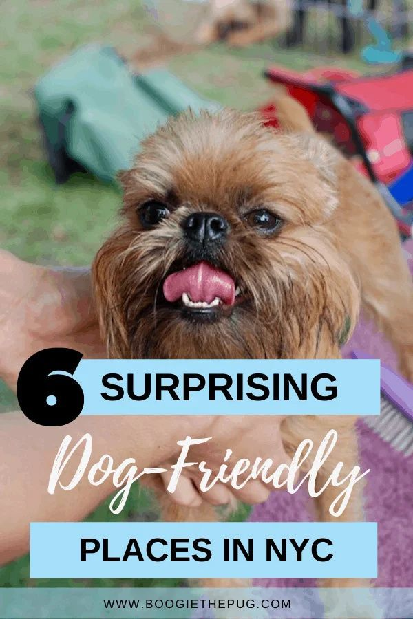 Six Surprising Dog Friendly Places In New York Dog Friends Dogs
