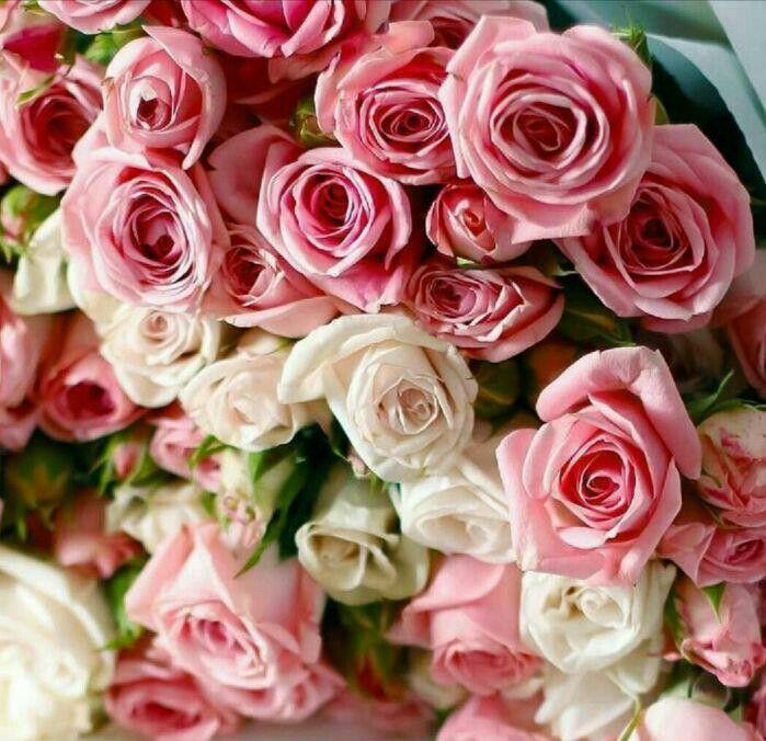 Открытки с розами по вайберу, открытки надюше
