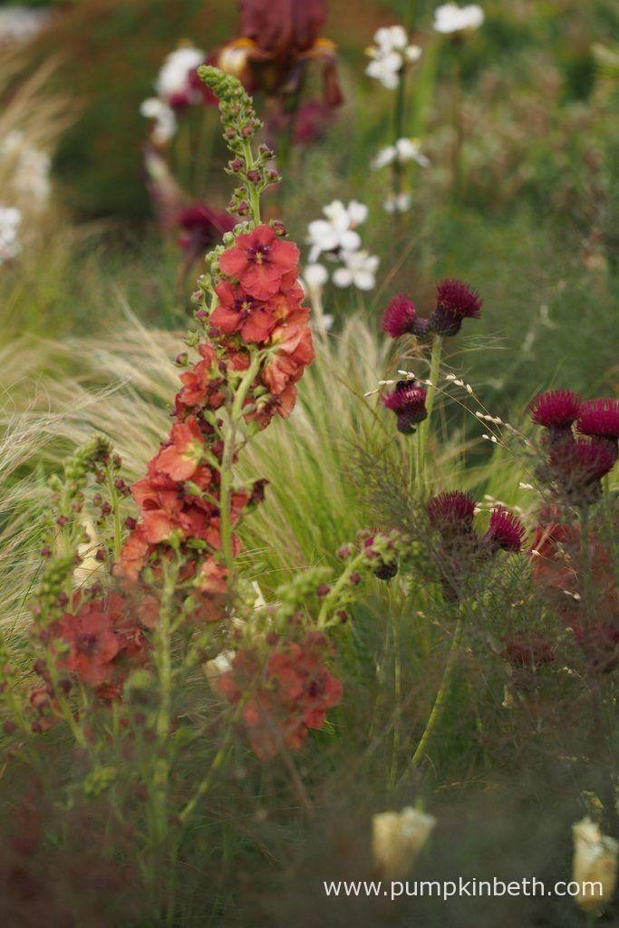 Matt Keightley and The Jeremy Vine Texture Garden - Pumpkin Beth