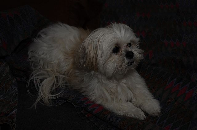 The Facts: What Shih Tzu are loved for ?