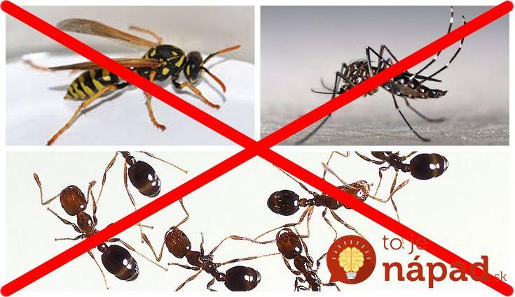 6 domácich receptov, ktoré vás zbavia otravného hmyzu!