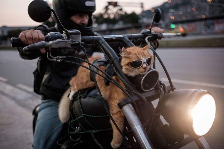 """Easy Rider  (20.06.16)      Seine Katze """"Chiquinho"""" fährt immer mit: Ein..."""