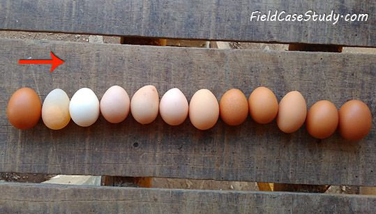 H9n2, Newcatle disease, nd, signs, symptom, avian influenza, chicken, newcastle disease in poultry