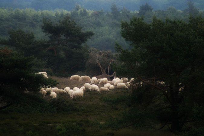 Landscapes • Adriaan Holsappel
