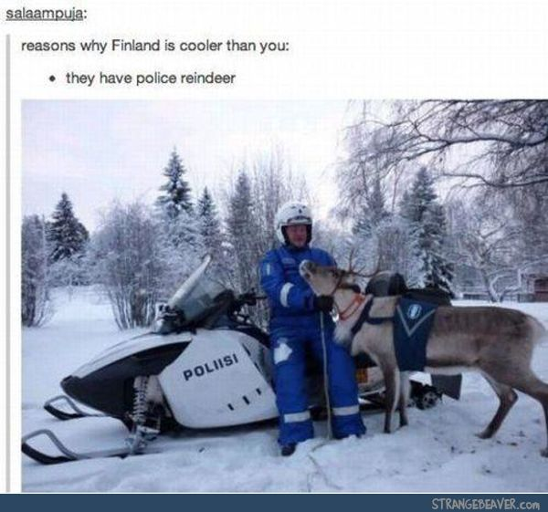 Finnish police have reindeer!