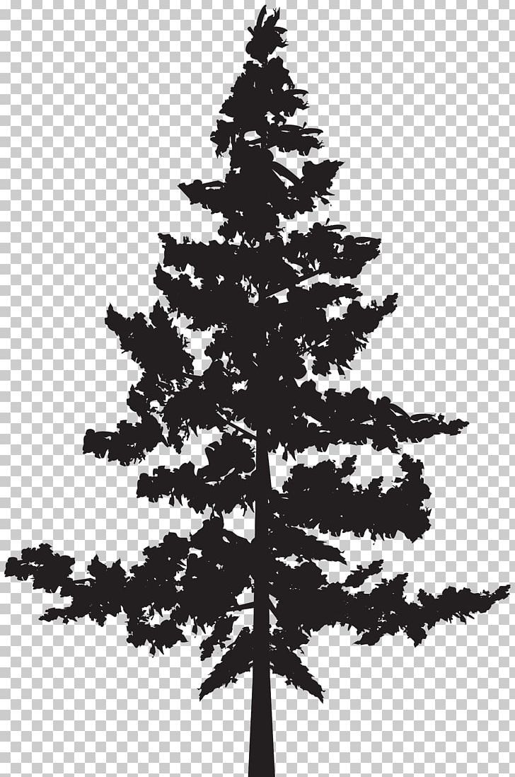 Black Pine Tree Pinus Contorta Png Black And White Black Pine Branch Christmas Decoration Christmas Ornament Black Pine Tree Black Tree White Pine Tree