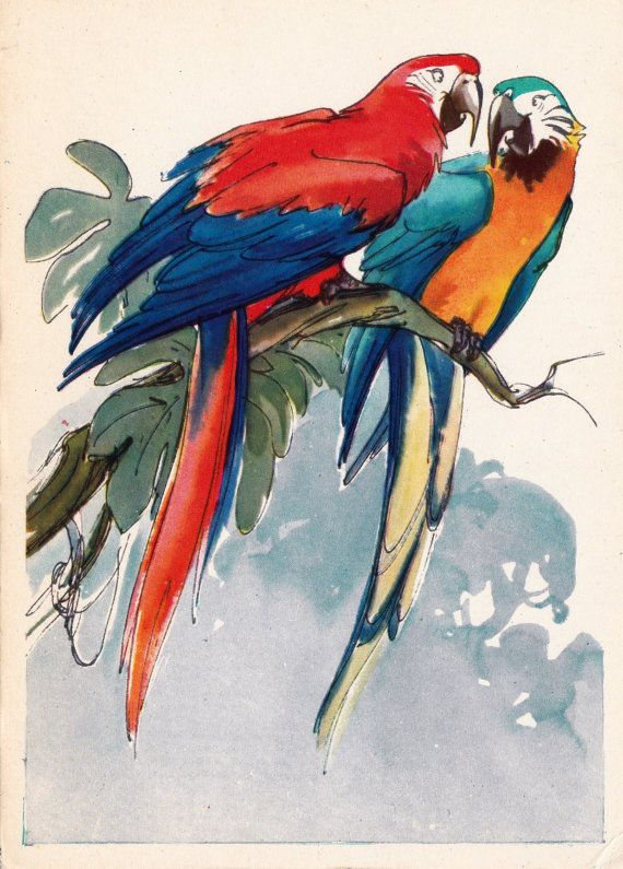 M. Alexeyev N. Stroganova Parrots Postcard  by RussianSoulVintage