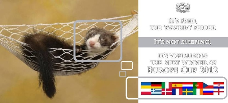 Fred, the psychic ferret, is visualising the next winner of Europe Cup 2012