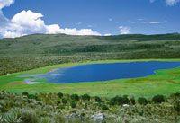 Laguna en la región de Sumapaz, en proceso natural de sedimentación debido al crecimiento cíclico o estacional de plantas flotantes.