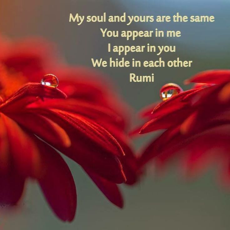 My soul and yours are the same, You appear in me, I appear in you, We hide in each other. Rumi