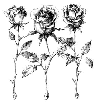 Single roses drawing set vector on vectorstock tattoos pinterest rose drawings single rose and drawings