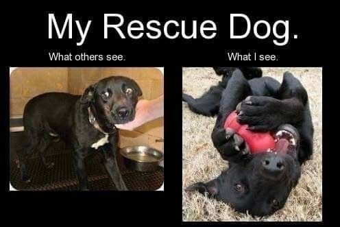 Legit Shelter Dogs Adoption Shelter Dogs Dog Adoption