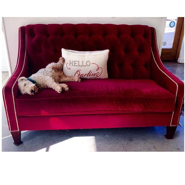 Our Lincoln Sofa Has Made A Friend Roger Chris Home Of