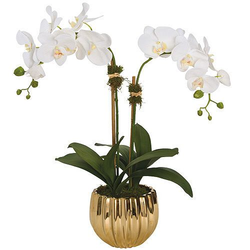 Diane James Orchid Arrangement, GH Exclusive