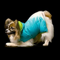 As cold as Canadian winters get, I'm surprised there's only one company making down-filled coats for dogs! And it's SO cute!