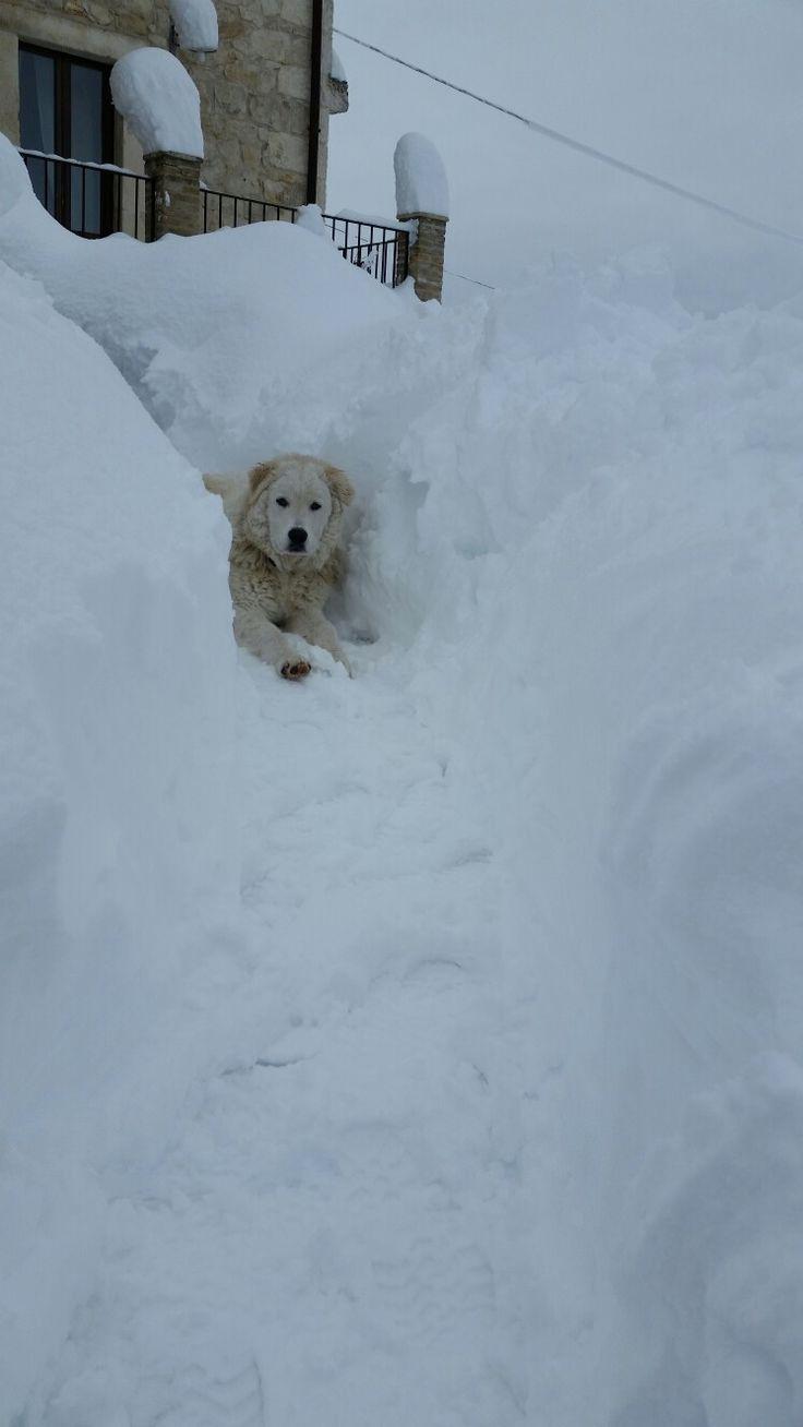 Zeus, il nostro cucciolo che gioca nella neve