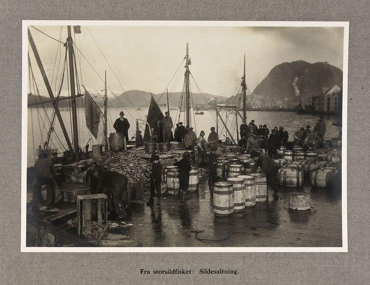 From Wikiwand: «Fra storsildfisket: Sildesalting», Ålesund 1920Foto: Sigvald Moa/Nasjonalbiblioteket