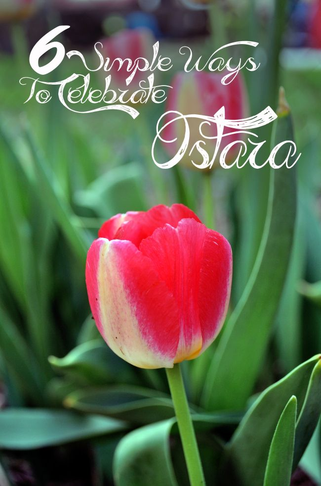 Six Simple Ways to Celebrate Ostara, the Spring Equinox.  There's no need to organize an elaborate ritual to recognize this lovely spring pagan holiday---here are six simple ideas to help you connect with the season and honor the holiday.