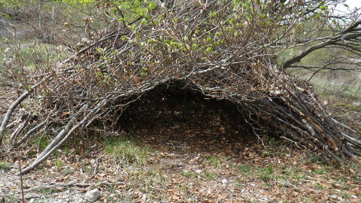 Rifugio naturale utilizzando i rami piegati di una pianta del posto.