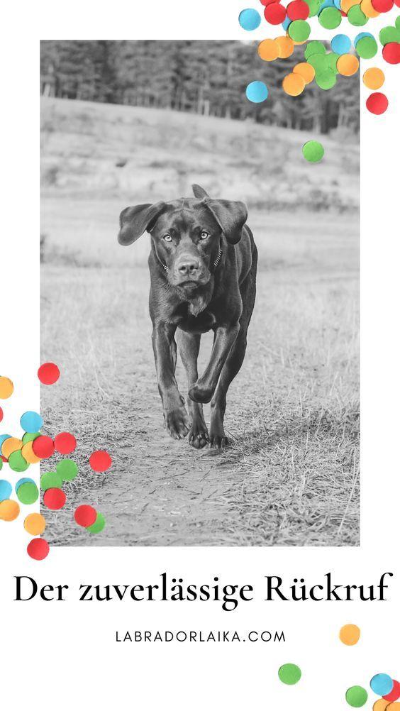 Pin Auf Fit Und Gesund Gruppenboard Hundeblogger