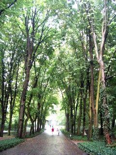 ワルシャワ ワジェンキ公園 ポーランド 旅行・観光の見所を集めました。