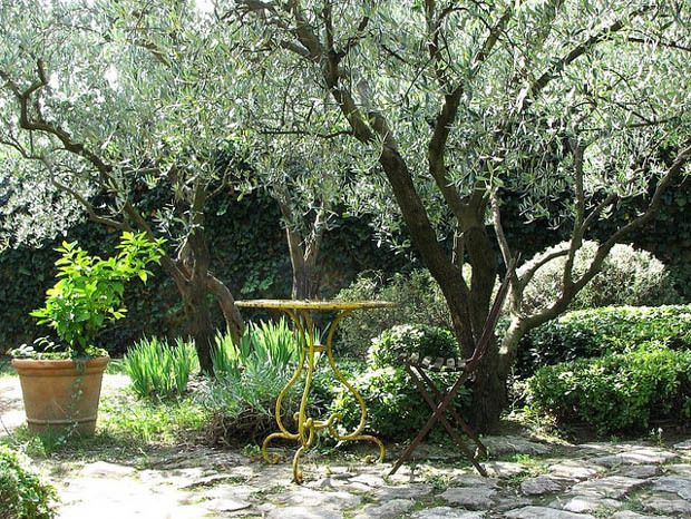 tips to create a mediterranean garden garden provence. Black Bedroom Furniture Sets. Home Design Ideas