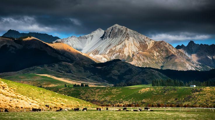 Nueva Zelanda paisaje, montaña, cielo, nubes, pasto, ganado Fondos de pantalla - 1920x1080