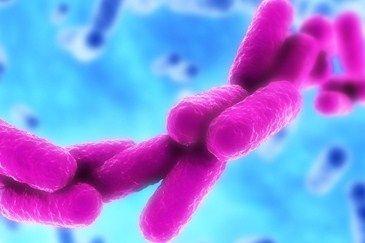 dna bacterie