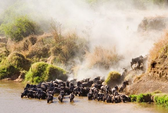 The Great Migration, Kenya / Tanzania, Africa