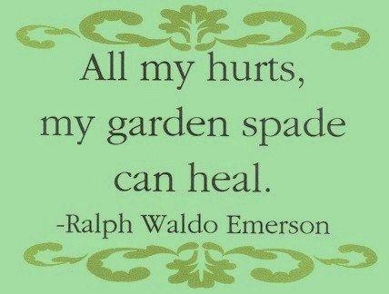 Quote Garden 503 Best Garden Wisdom Quotes Images On Pinterest  Garden Art