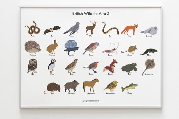 British Wildlife A Z Poster A4 A3 Animals Print Gift Etsy Wildlife Bedroom British Wildlife Wildlife Decor