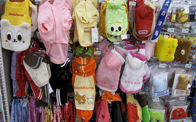 Why and Where to Shop for Wholesale Pet Supplies - Top Dog Tips