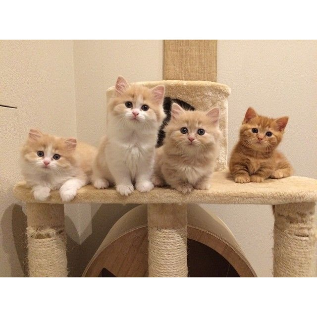 Don't these little kittens just melt your heart.....