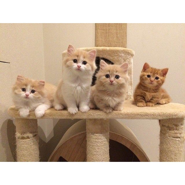 Muitos gatos