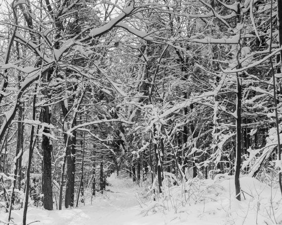 Beautiful winter scenery of a snow covered forest taken in Montreal, Quebec. Fine art print, Wall art print. TITLE: Winter wonderland SIZES: