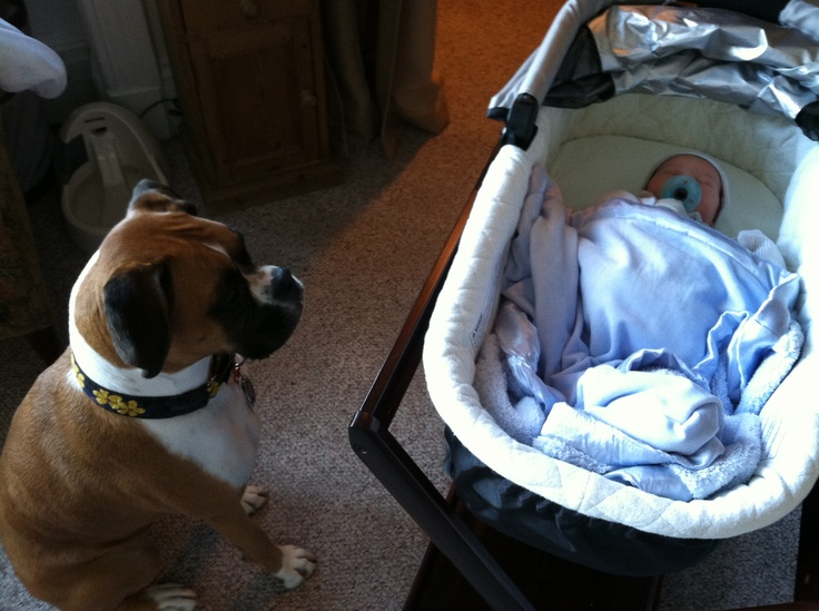 Boxer and Baby- this is so gonna be our babys someday.