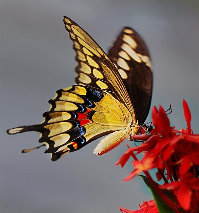 Butterfly by Bill Mangold