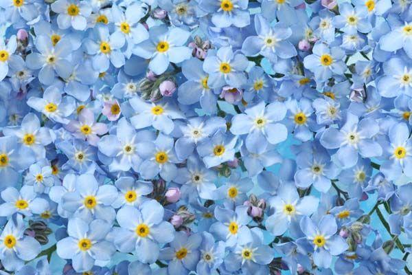 Цветы : 2059